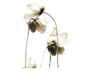 Sepia Fine Art Flower Photograph Ballad Of Blooms Black White Neutral Decor Minimalist Nature Garden Dreamy