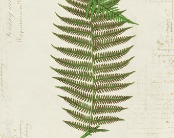 Vintage Fern on French Ephemera Print 8x10 P155