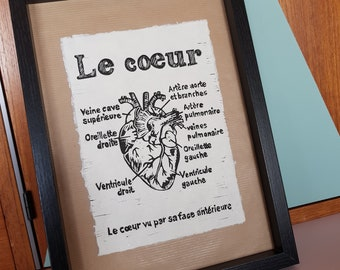 The heart, anatomically correct, linographie