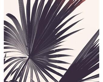 Palm Tree Print - Black and White Photograph - Tropical Art - Travel Photograph - Flare #10 -Tropical Print -California - Florida - Oversize