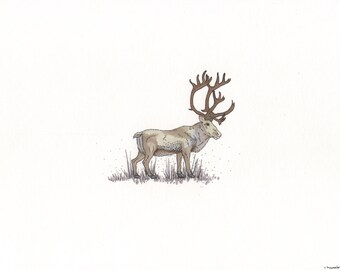 "Marker Illustration, Hand Drawn Print, Decoration, ""Caribou"""