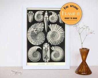 """illustration sea creatures from Ernst Haeckel - framed fine art print,sea life, home decor 8""""x10"""" ; 11""""x14"""", FREE SHIPPING 304"""