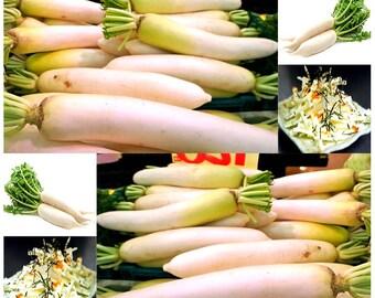 Japanese Daikon - Daikon Radish Seeds - Japanese Radish - Fresh Seeds - Fast Growth EXCELLENT RADISH SALAD Only 40 - 50 Days