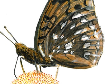 Great Spangled Fritillary - Insect Print
