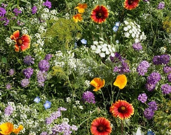 Beneficial Bug Blooms Mix Heirloom Seeds - Non-GMO, Open Pollinated, Untreated, Flower Seeds, Wildflower Seeds