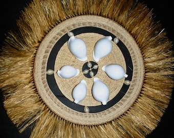 Six Large White Cowry Shells For Tongan Adornments