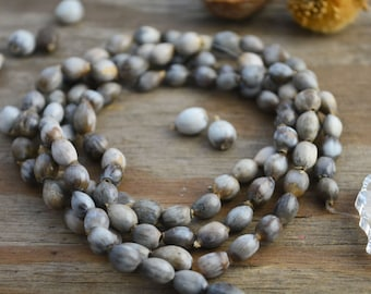 "100+ Job's Tears Seeds, Natural Seeds, Oval Grey Beads, 8-10mm x 36"" strand w/ 105 +/- Beads/Supplies, South American, Organic, Tribal, Boho"