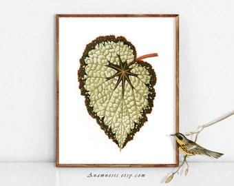 JOLIE feuille 2 - téléchargement de l'image numérique - illustration de plante antique imprimable réorganisée par totes anamnèse - transfert de l'image -, oreillers