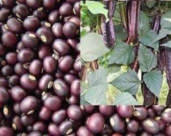 Thail Purple Winged Bean, Asian Vegetable -25 seeds