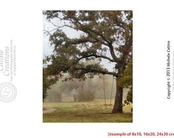 Tree Swing Photo Fantasy Swing in the Woods Mossy Woodland Texas Landscape Dreamy Landscape Nursery Art Girls Room Decor