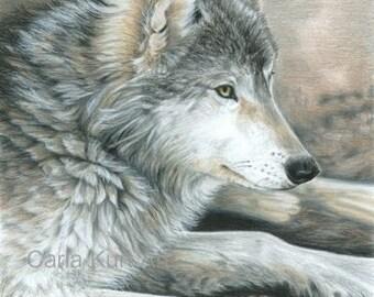 Wolf Art CALM WOLF print by Carla Kurt 11 x 14