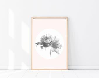 Peonie PRINT, Botanical Art Poster, Botanical Photography, Pink Wall Art, Botanical Print, Peonies Photograph, Large Poster, Pastel Wall Art