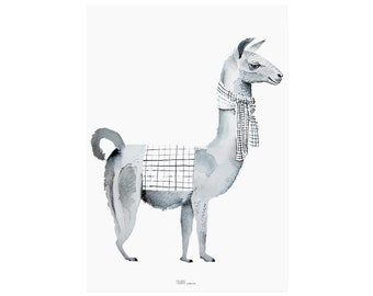 Llama with scarf Poster
