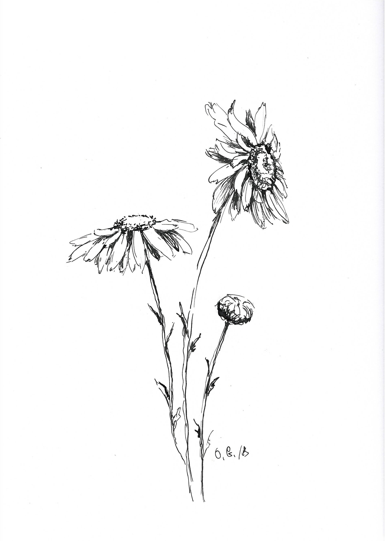 Fantastisch Blumen Malvorlagen Gänseblümchen Galerie - Beispiel ...