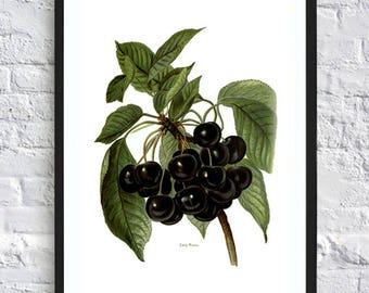 Kitchen wall art print kitchen print poster kitchen wall art print botanical illustrations vintage painting print fruit berries vegetable
