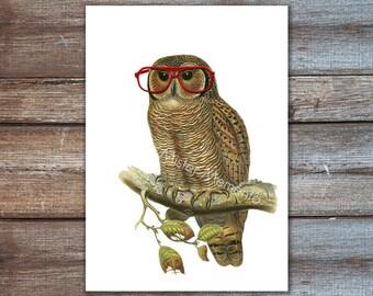 owl print, funny, happy art