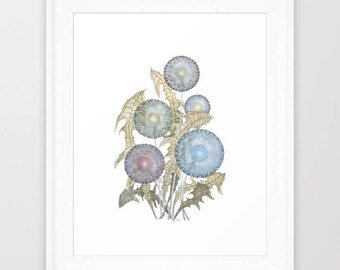 Dandelion fine art giclee print of watercolor painting, wall decor art illustration wall art watercolour by VApinx