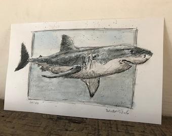 100 Animals, 100 Days: 24/100 The Great White Shark