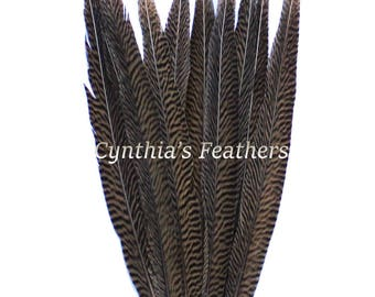 "Pheasant Feathers Natural Golden Pheasant Tail Feathers 10 Pieces 14-16"" Long Top Quality Millinery Costume Decorations  SKU: 7A92"