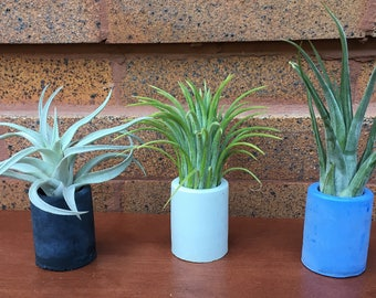 Urban Chic Colored Concrete Air Plan Pots with Air Plants - A Unique Holiday or Birthday Gift