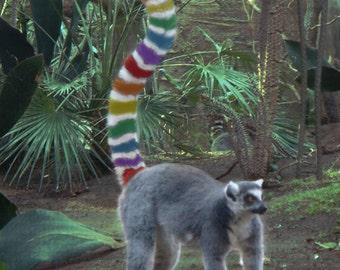 Rainbow Lemur Greeting Card, LGBT, Gay Pride, Blank, 5x7 Card