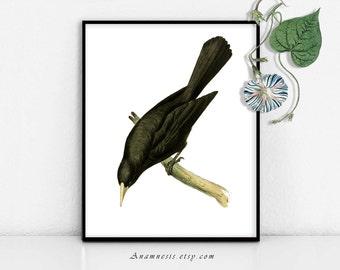 OISEAU noir - digital Télécharger - illustration oiseau antique imprimable réorganisée par anamnèse - image transfer - totes, estampes, oreillers, vêtements