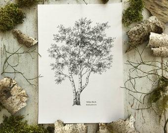 White Birch - Print A4