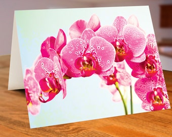 Pack of 25 Pink Spotted Phalaenopsis Cards