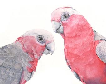 Galahs print of watercolor painting G2315 - A3 size largest print, bird art, wall art, home decor, australian bird art