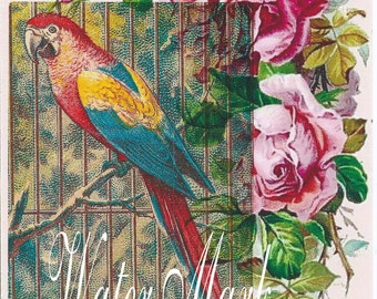 Quilt, Art Fabric Block*Parrot colorful McCaw in cage*Pink roses collage*original design*One 5x7*