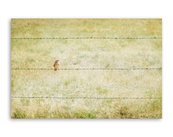 """large canvas wall art, large wall art, large colorful landscape wall art, large landscape, large art, large canvas art -""""Bird & Barbed Wire"""""""