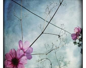 fleur violette (Nature Photography - Fine Art Print - Cosmos Flowers - Branch - Wildflower - Spring - Pink - Purple - Blue)