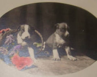 SALE Cute Vintage RPPC (Puppies)