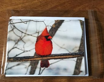 Bird Note Cards, Male Cardinal note cards, single-sided blank note cards, post cards, 8 photographic note cards, stationery