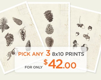 Special Promo - Any 3 8x10 Prints for only 42 dollars