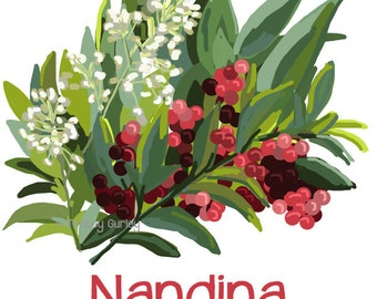 Nandina Painting - Original Art, nandina clip art, nandina flowers and berries