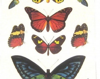 Butterfly Beauty perfect for ACEO, ATC, Assemblage, Altered Art, Collage or Scrapbooking