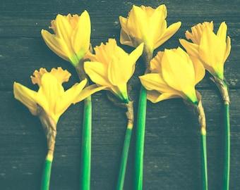 Daffodil Photograph - Floral Wall Art - Flower Photograph - Spring - Still Life - Rustic Art Print - Black Yellow - Botanical - Farmhouse