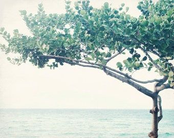 "Hawaii photography - ocean print - pale blue green wall art - minimal tree print - tropical decor  ""Nouveau Tree"""