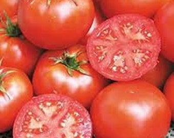 Bonny Best Tomato Heirloom Garden Seed 30+ Seeds Non-GMO Naturally Grown Open Pollinated Gardening