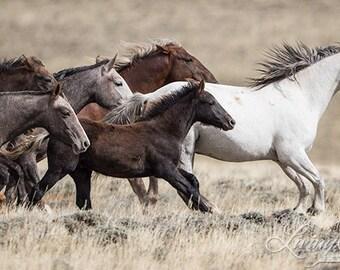 Adobe Town Family Runs - Fine Art Wild Horse Photograph - Wild Horse - Adobe Town