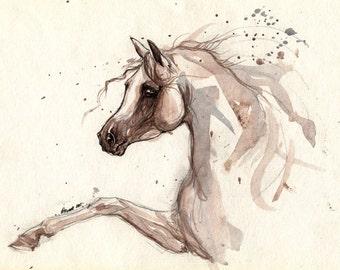 Arabian horse original pen and watercolour painting