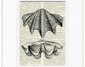 giant clam shell dictionary page print
