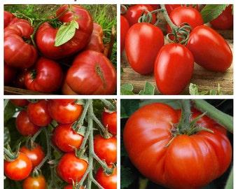 Save 50%!  TASTY TOMATOES SEED Kit - 4 Different Types - Beefsteak, Chery, Brandywine, Roma Plum - Fresh Seed - Heritage Vegetable Garden