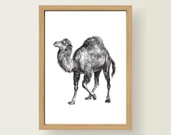 Safari Animal Camel Nursery Art Decor A3 Print