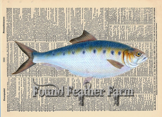 "Vintage Antique Dictionary Page with Antique Print ""Colorful Blue Ocean Fish"""