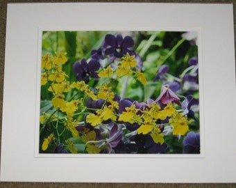 Matted, Yellow, Purple, Orchids, Phipps Conservatory, Pittsburgh, PA, Fine Art, Photography, Print, Glossy, 8 x 10