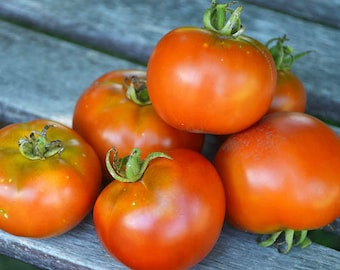 Tomato 'Dubrava' - Open Pollinated Seeds
