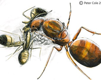 Ant Queen - Insect Print