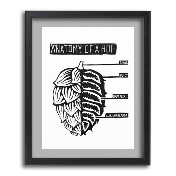 Anatomy of a Hop - Instant Digital Download